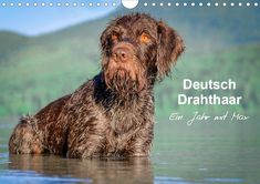 One year with Max, a 6 year old German wire-haired pointer, all photos taken in nature settings, no studio, a must have. Wirehaired Pointing Griffon, German Wirehaired Pointer, Pet Dogs, Dog Cat, English Pointer, House Rabbit, Photo Calendar, Dog Mom Gifts, Dog Hacks