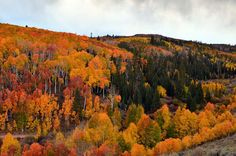 Many of these country roads and scenic byways will soon be covered in snow; now's the time to explore them for peak fall foliage! Utah Vacation, Vacation Ideas, Utah Camping, Utah Hikes, Road Trip Hacks, Road Trips, Future Travel, Outdoor Fun, Places To See