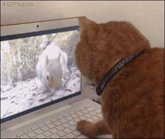 GİF HAREKETLİ RESİMLER % 100 ÜCRETSİZ PAYLAŞIM: Kedi Bilgisayar başında