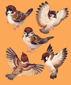Cute Animal Drawings, Animal Sketches, Bird Drawings, Art And Illustration, Bird Sketch, Watercolor Bird, Cute Birds, Animal Paintings, Bird Art