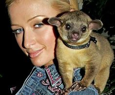 While just about everyone loves their pets, celebrities are notorious for pampering and indulging their animals. From Chihuahua mansions to personal chefs, these celebrity pets live in the lap of luxury and enjoy a life on par with their famous owners.