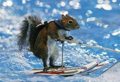 Ski squirrel