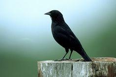 Toda criatura é hierárquica. Diante de minha janela cresce uma árvore, que como qualquer outro ser vivo, tem uma constituição fortemente hierárquica: um tronco grosso cravado no…