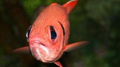 We're Screwing Up the Oceans So Much, These Fish Can't Find Their BFFs   Mother Jones