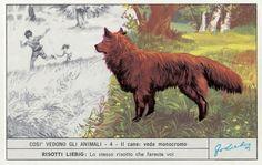 Così vede il cane, 1973
