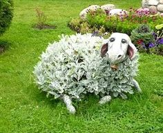 Lawn sheep covered with what looks like lambs ear.