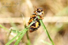 #Escarabajo llamativo en #Segovia #Macro