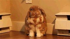 Un lapin qui baille au ralenti, ça donne ça... #gif
