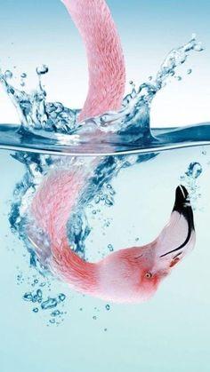 Wow! Flamingo head seen from underwater.