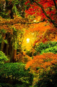 Sunrise through the trees in the Japanese Gardens of Portland. The Portland Japanese Garden is considered to be the most authentic garden outside of Japan. Beautiful World, Beautiful Places, Beautiful Pictures, Foto Nature, Autumn Scenes, Fall Pictures, Nature Pictures, Amazing Nature, Belle Photo