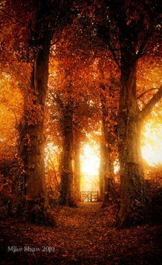 Autumn gate