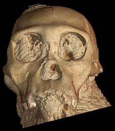 Take a look at the bones of what may be the direct ancestor of humanity.