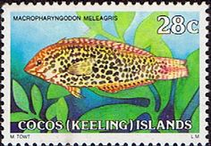 Cocos Keeling Islands 1979 Fishes SG 40a Guineafowl Wrasse Fine Mint Scott 42  Other Cocos Keeling Island Stamps HERE