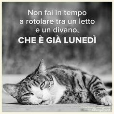 Magari..... invece si lavora anche di domenica Good Morning Good Night, Day For Night, Funny Times, My Mood, Animals And Pets, Weird, Puppies, Smile, Thoughts