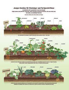 Trend Nur den Rasen zu m hen reicht nicht Ab und an sollte man den Rasen auch vertikutieren Vor allem im Fr hjahr ist das hilfreich um den Rasen besse u