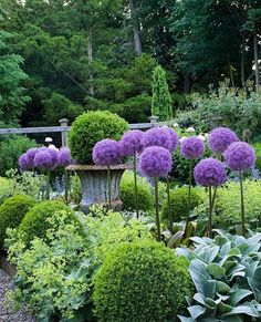"""TOWN&COUNTRY: """"Purple and green are the ideal color combo : gardens at first sight..."""""""