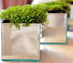 DIY planter boxes using mirrors. Very elegant for centerpieces or in front of a window with a lot of sun. Mmm, the sparkles and light they'd bring!