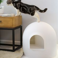 Creative Cave Designed Cat's Toilet Cat Toilet, Litter Box, Toy Boxes, South America, Cats And Kittens, Bean Bag Chair, Cave, Pets, Creative