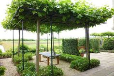 #Duurzaam alternatief voor een afdak: gewoon #bomen laten groeien... @HettyLinden @GMJD030 @DeBomenridders