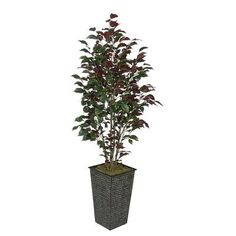 House of Silk Flowers Ficus Tree in Planter Leaves Color: Red (Capensia)