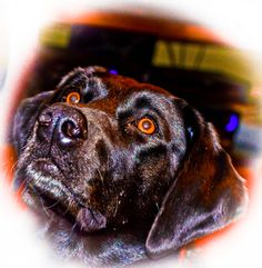 the best dog...our Lab Aggie