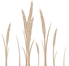 Ear of Wheat Vector Art Free