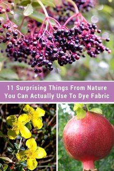 11 Surprising Things From Nature You Can Actually Use To Dye Fabric - I never would have guessed that avocados make the color they do — or how easy it is to get a stunning purple from #7!