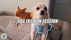 Dog Fashion Session: Doggy Overalls - chihuahua and pomchi put on dog cl... Dog Fashion, Minka, Put On, Chihuahua, Overalls, Cute Animals, Dogs, Outfits, Clothes
