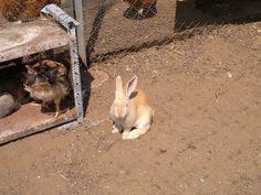 Bunny al sole