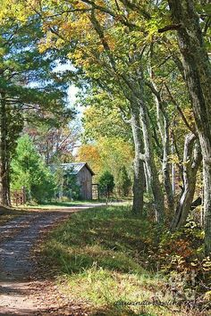 Virginia Country Road by Laurinda Bowling