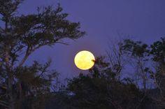 Super-Lua nos céus do estado da Geórgia, USA.  Fotografia: Brad Ervin.