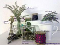 Tag für Ideen: Meine Lavendel-Ernte hat begonnen...