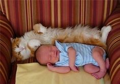 19 Reasons Cats Are Better Than Dogs