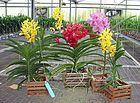 Neste vídeo vamos ensinar a fazer trouxinhas para adubar sua orquídea com adubo caseiro. Assista o vídeo e aprenda de foram super simples
