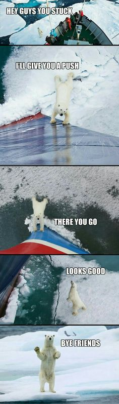Funny pictures about Good guy polar bear. Oh, and cool pics about Good guy polar bear. Also, Good guy polar bear. Animal Jokes, Funny Animal Memes, Cute Funny Animals, Funny Animal Pictures, Cute Baby Animals, Funny Cute, Animals And Pets, Funny Memes, Funniest Memes