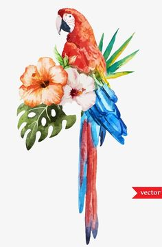 Illustration of Beautiful vector set with nice watercolor tropical birds vector art, clipart and stock vectors. Parrot Drawing, Parrot Painting, Art Tropical, Tropical Birds, Parrot Wallpaper, Tumblr Wallpaper, Bird Drawings, Animal Drawings, Art Floral