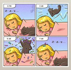 Catsu The Cat.