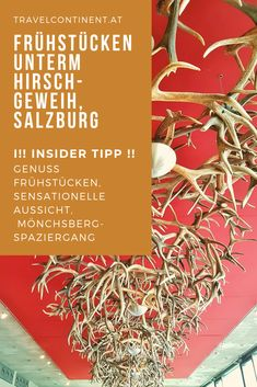 Mein Insider-Tipp für #Salzburg-Stadt: genieße ein tolles #Frühstück unter Hirsch-Geweihen, mit sensationeller Aussicht über die zauberhafte Stadt, dazu Tipp für Spaziergang am Mönchsberg. #reiseziele #Stadtetrip #essenundtrinken #frühstücken Restaurant, Cover, Walking Paths, Old Town, Destinations, Diner Restaurant, Restaurants, Dining
