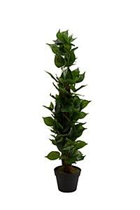 ARTIFICIAL IVY TREE Ivy Tree, Mr Price Home, Plants, Home Decor, Decoration Home, Room Decor, Planters, Plant, Planting