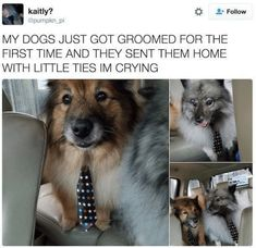 In order to save you some time, we've searched the entire internet to bring you the best funny pictures of the day. and meds dogs, and pets klub crtani filmovi disney. Funny Animal Memes, Dog Memes, Cute Funny Animals, Funny Animal Pictures, Cute Baby Animals, Funny Cute, Best Funny Pictures, Funny Dogs, Animal Pics