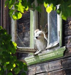 Romeo., Romeo, where are my treats!!!