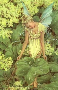 Fairy in the clover
