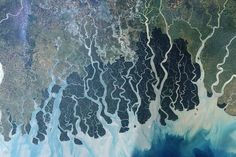 "Sundarbans by nasa: ""Stretching across part of southwestern Bangladesh and southeastern India, the Sundarbans is the largest remaining tract of mangrove forest in the world. The Sundarbans is a tapestry of waterways, mudflats, and forested islands at the edge of the Bay of Bengal. Home to the endangered Bengal tiger, sharks, crocodiles, and freshwater dolphins, as well as nearly two hundred bird species."" http://pruned.blogspot.com/2006/10/sundarbans.html #Sundarbans #Mangrove_Forest"