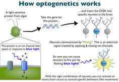 Optogenetics - A Primer.