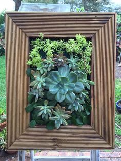 Vertical garden Check For the love of succulents fb page  https://www.facebook.com/pages/For-the-Love-of-Succulents-the-living-wall/1603195046581892  Instagram: @FTLO_succulents