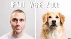If You Were A Dog… (Video)
