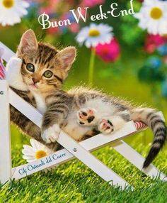 11 fantastiche immagini su buon week end good morning for Buongiorno con gattini