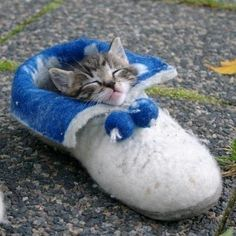 Slipper kitty. Only $19.99, but for a limited time only, get an extra slipper AND kitten for FREE!!! (Just pay shipping and handling)