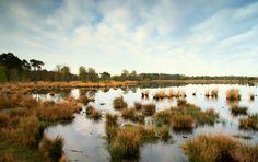 Kampina near Boxtel in the Netherlands.