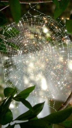 Cobweb with dewdrops. Beltane, All Nature, Amazing Nature, Spider Art, Spider Webs, In Natura, Crazy Quilting, Samhain, Natural Wonders